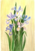 Iris sur fond jaune